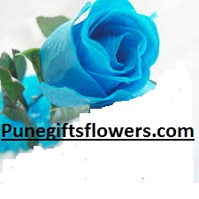 Everlasting blue rose Only for Pune