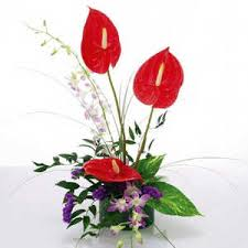 3 Anthurium and 2 orchids basket