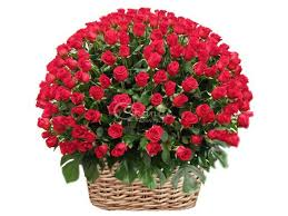 80 roses in a basket