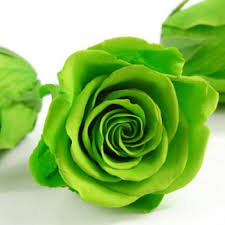 Everlasting green rose Only for Pune